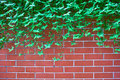 Green leaves on brick wall Royalty Free Stock Image