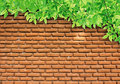 Green Leaves on brick wall Royalty Free Stock Photo