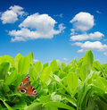 Green leaves with butterfly Royalty Free Stock Photo