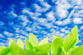 Green leaves with clear bule sky photo of for background texture Stock Images