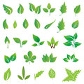 Green leaves collection of illustration Stock Photography