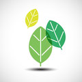 Green leaves design elements Royalty Free Stock Photo