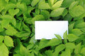 Green leaves with empty card Stock Photos