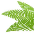 The green leaves of a fern. Royalty Free Stock Image