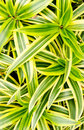 Green leaves in garden and yellow background Stock Photography