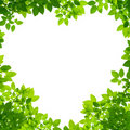 Green Leaves in heart shape on white Royalty Free Stock Images