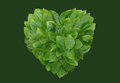 Green leaves heart shaped heart form on background Royalty Free Stock Photos