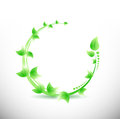 Green leaves illustration design over a white background Royalty Free Stock Images