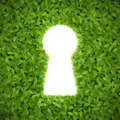 Green leaves with keyhole illustration Stock Photography