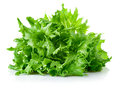 Green leaves lettuce Royalty Free Stock Image
