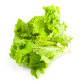 Green leaves of lettuce salad Stock Photos