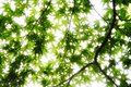 Overexposed Leaves Royalty Free Stock Photo