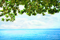 Green leaves from overhanging tree over blue ocean horizon framing in background Royalty Free Stock Images