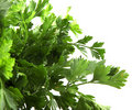 Green leaves of parsley Stock Photography