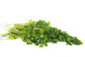 Green leaves of parsley isolated on white background Royalty Free Stock Photos