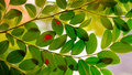 Green leaves with red spot Royalty Free Stock Photo