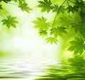Green leaves reflecting in the water shallow dof Royalty Free Stock Photography