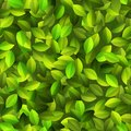 Green leaves seamless pattern eps vector file Stock Photo
