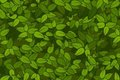 Green leaves seamless texture Stock Photography