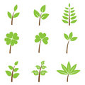 Green leaves - set Royalty Free Stock Photography