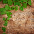 Green leaves with shape of heart Stock Photography