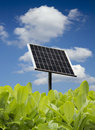 Green leaves with solar panel Stock Image