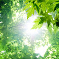 Green leaves with sun in forest Stock Images