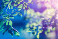 Green leaves and sunlight with blue magenta tone shining on leafy plant Stock Images