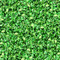 Green Leaves With Sunlight Seamless Pattern Stock Photography