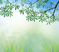 Green leaves of tree branch in the morning light use as natural freshness background Royalty Free Stock Image