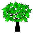 Green Leaves on Tree in Summer Royalty Free Stock Photo
