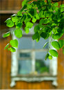 Green leaves and window of country house Royalty Free Stock Photo