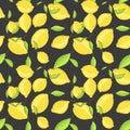 Green lemon fruits with leaf on branch dark black Royalty Free Stock Photo