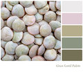 Green Lentil Palette Royalty Free Stock Photo