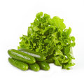 Green lettuce and cucumbers Royalty Free Stock Image