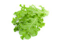 Green lettuce salad fresh leaf isolated on white Stock Photography