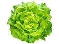 Green lettuce salad head Royalty Free Stock Photo