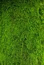 Green lichen background natura gras Stock Images