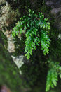 Green life Royalty Free Stock Photo