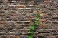 Green life on brick Royalty Free Stock Photo