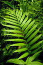 Green living in the Cloud Forest Royalty Free Stock Photo