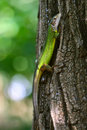 Green lizard on a tree bark Royalty Free Stock Images