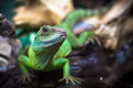 Green lizards Royalty Free Stock Photo
