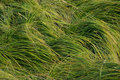 Green long grass Royalty Free Stock Photo