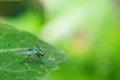 Green Long Legged Fly Stock Photo