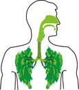 Green lung - a breath of fresh air Royalty Free Stock Photo