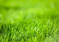 Green luscious grass. Stock Images
