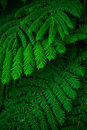 Green lush ferns growing in wild rain forest of australia queensland Stock Image
