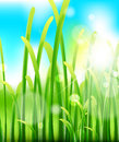 Green lush grass and sky nature macro background spring summer Stock Image