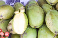 Green mango mangifera indica a lot of at a market in phu quoc vietnam Royalty Free Stock Image